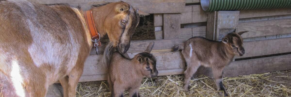 camping bretagne mini ferme